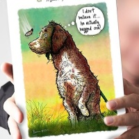 A good days shoot Spaniel Card