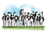 Cow Pony Card