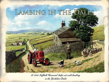 Lambing in the Dales Metal Sign