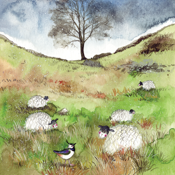 Sheep and Sycamore Card