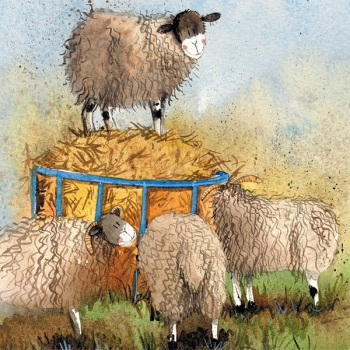 Sheep and Hay Card