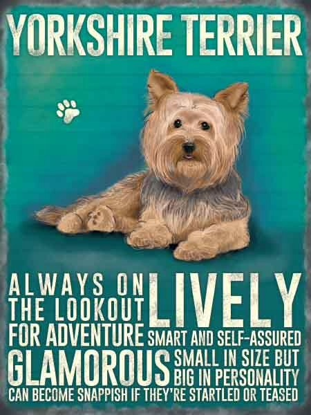 Yorkshire Terrier Metal Sign