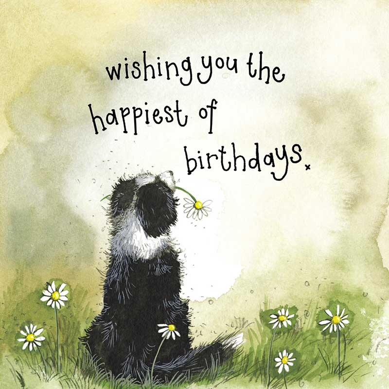 Sunshine Collie Birthday Card