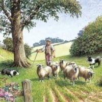 Eyeing them Up Sheep and Collie Card