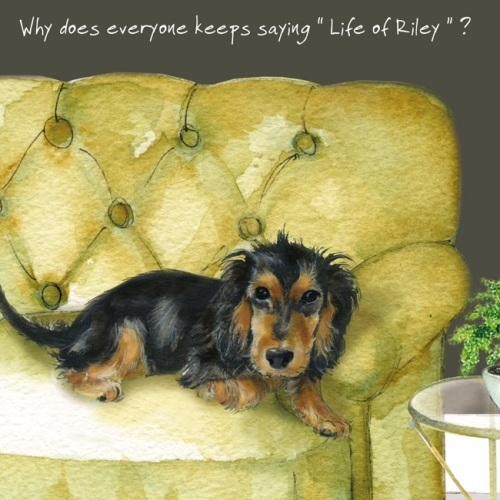Life of Riley Spaniel Card