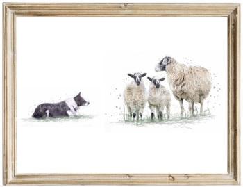 Border Collie and Sheep Print