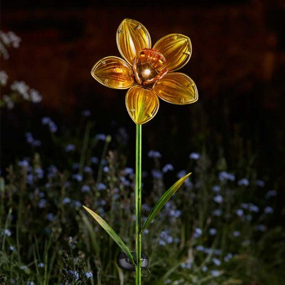 daffodil lighting