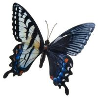 Blue Colourful Butterfly Wall Art