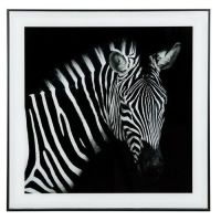 Zebra Framed Picture Wall Hanging 50x50cm