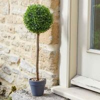 Uno Topiary Tree in pot