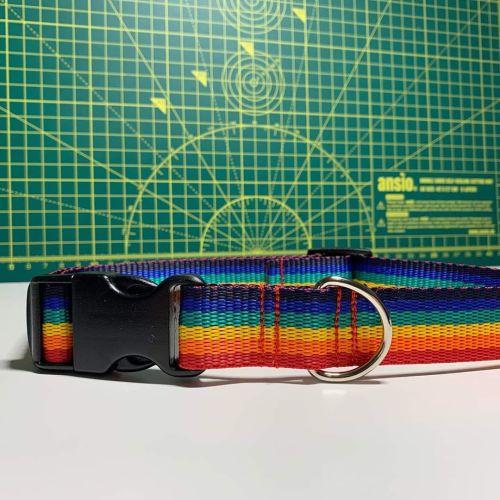 Rainbow collar medium