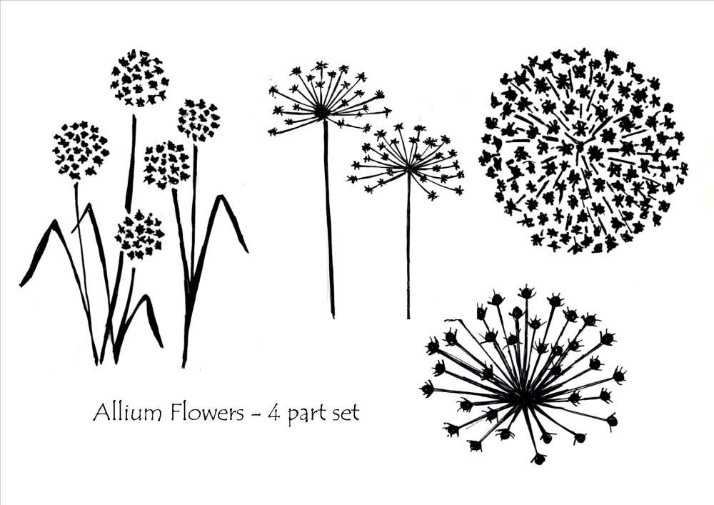 Allium Flowers - 4 part set
