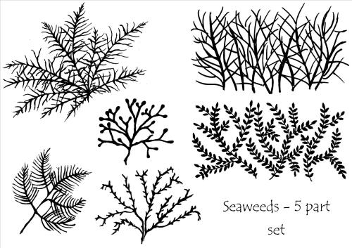 Seaweeds - set of 5
