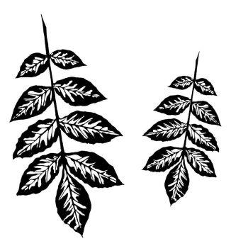 """Ash Leaf pair: 5"""" & 3.5"""""""