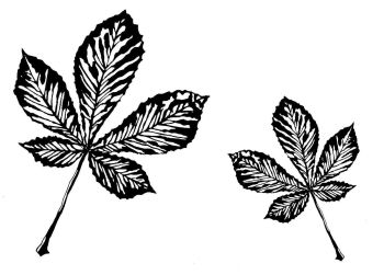 "Horse Chestnut leaf pair: 5"" & 3.5"""