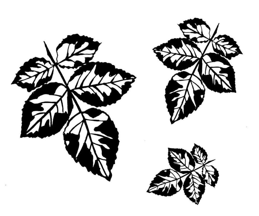 Rose Leaf set: 4