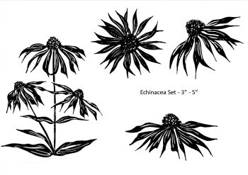 Echinacea set of 4: smaller and reverse orientation