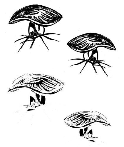 Bolette Fungi: Set of 4