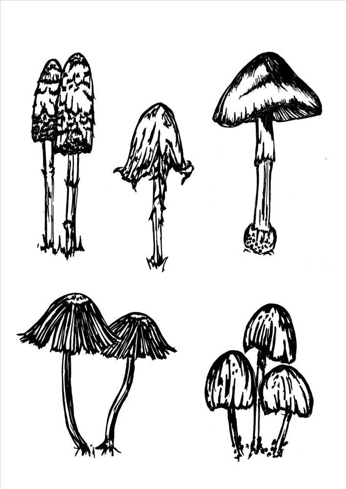 Shrooms: Set of 5