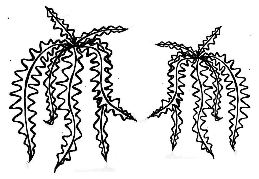 Leaf Cactus: LEFT AND RIGHT FACING., PAIR 5