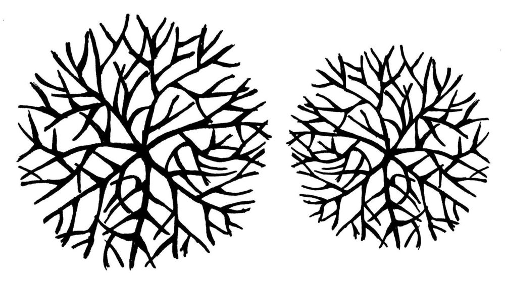 Cell: pair 4