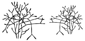 """Pencil Cactus: left and right facing - p[air 5"""" and 4"""""""