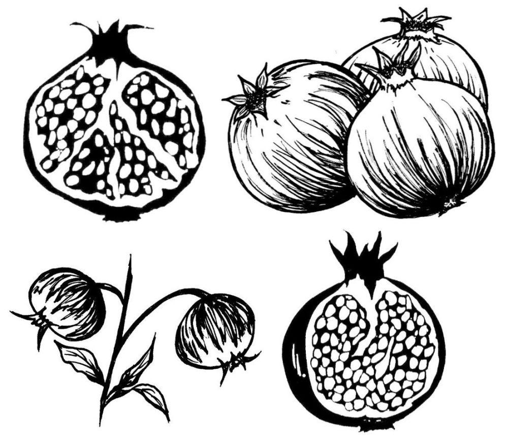 Pomegranate Set of 4:  3.5