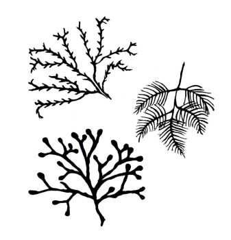 "Seaweeds C: Favourites!! 3"" - 4"""