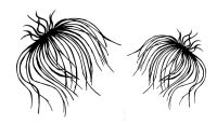 """Fluffy Seed-heads pair - 4"""" and 3"""""""