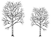 "Red Oak Trees - pair - 5"" and 4"""