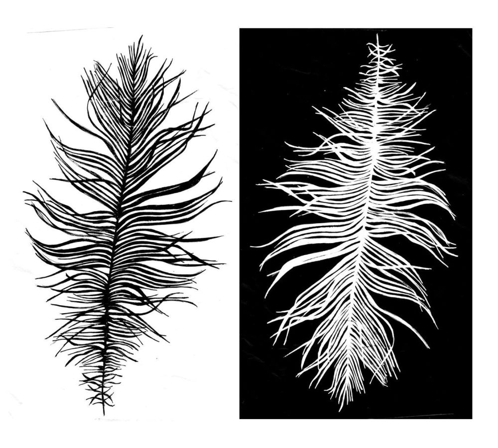 Beach Feather: positive and negative pair - 5