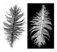 Beach Feather: positive and negative pair - 5""