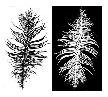 """Beach Feather: positive and negative pair - 5"""" ...  pre-order, due Oct 2020"""