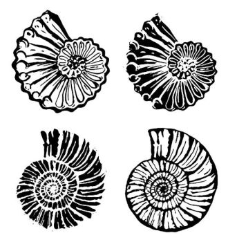 Fossils, set of 4 - 4""