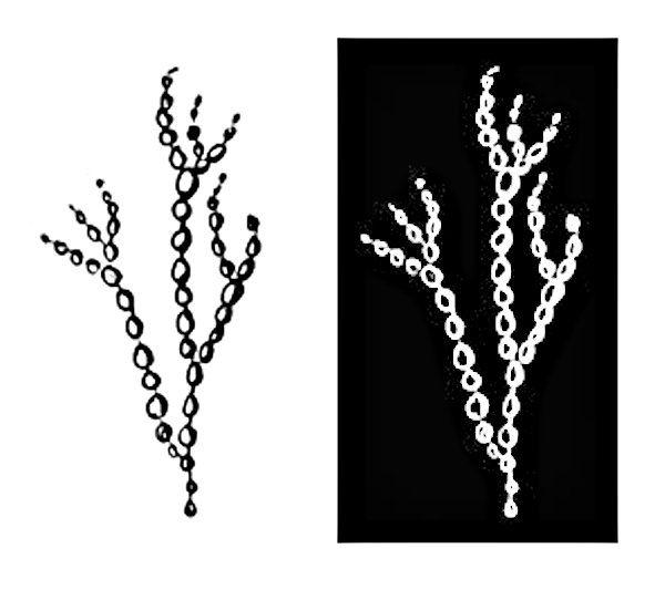 Weeds Set D - 2 blocks : 4