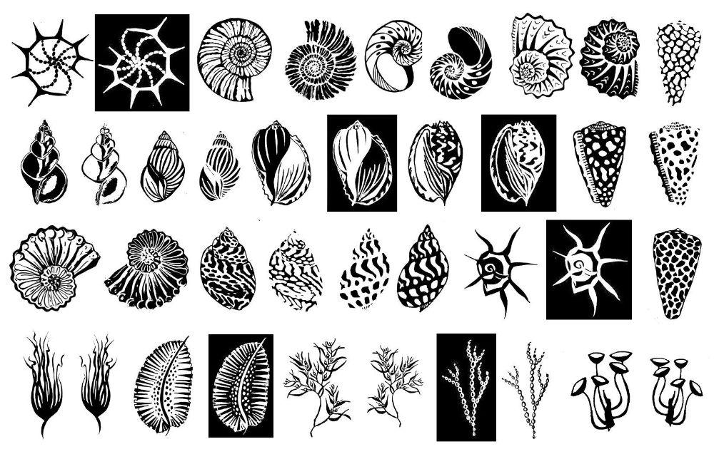 Shells, Fish,  and Sealife