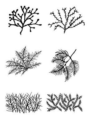 Seaweeds and other weeds