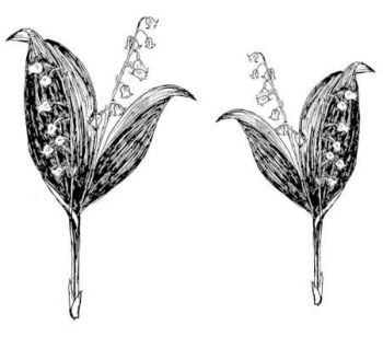 """Lily of the Valley pair: 4.5"""" and 3.5"""""""