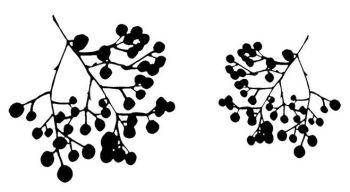 "Berries pair: 4"" and 3"""