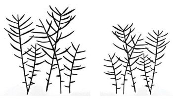 """Grasses pair: 4"""" and 3"""""""