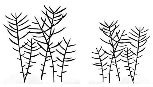 Grasses pair: 4