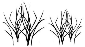 """Maram grass pair: 4"""" and 3"""""""