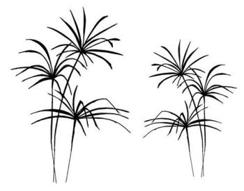 """Ferns pair: 4"""" and 3"""""""
