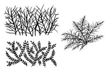 """Seaweeds D- set of 3:  - 5"""" each"""