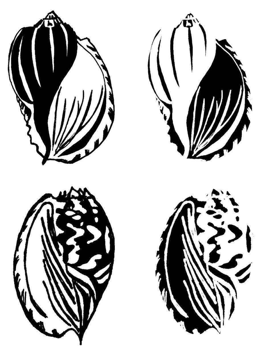 Shells Set A - 4 blocks x 3.5