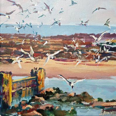 terns diving