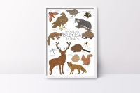 Amazing British Animals Art Print