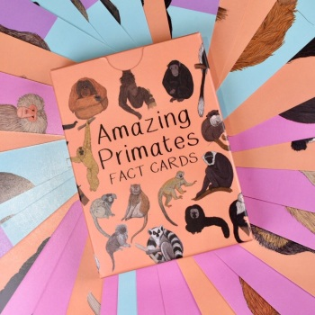 Amazing Primates Fact Cards