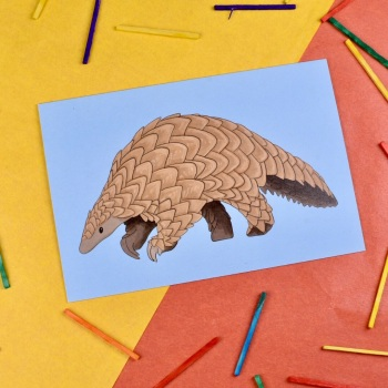 Pangolin Card