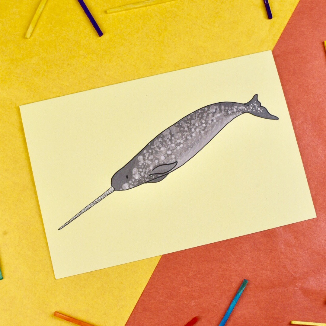 Narwhal Card